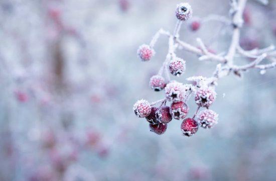 aliments sante hiver